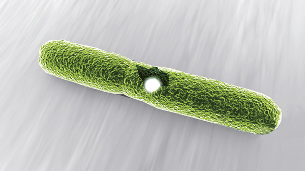 2) Silberionen zerstören Zellmembrane des Keims