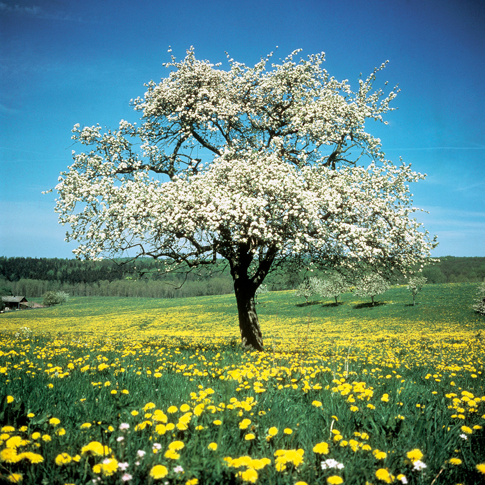 Chez HOPPE le respect de l'environnement a le « statut constitutionnel »